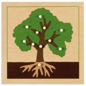 Puzzle Botánico - Árbol